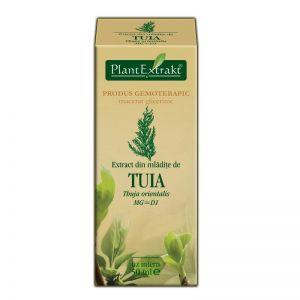 EXTRACT DIN MLADITE DE TUIA MG=D1, 50 ml, Plant Extrakt