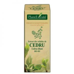 EXTRACT DIN MLADITE DE CEDRU MG=D1, 50 ml, Plant Extrakt