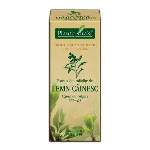 EXTRACT DIN MLADITE DE LEMN CAINESC MG=D1, 50 ml, Plant Extrakt